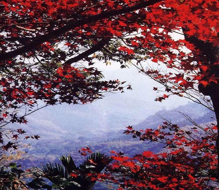 「關子嶺紅葉公園 楓葉」的圖片搜尋結果