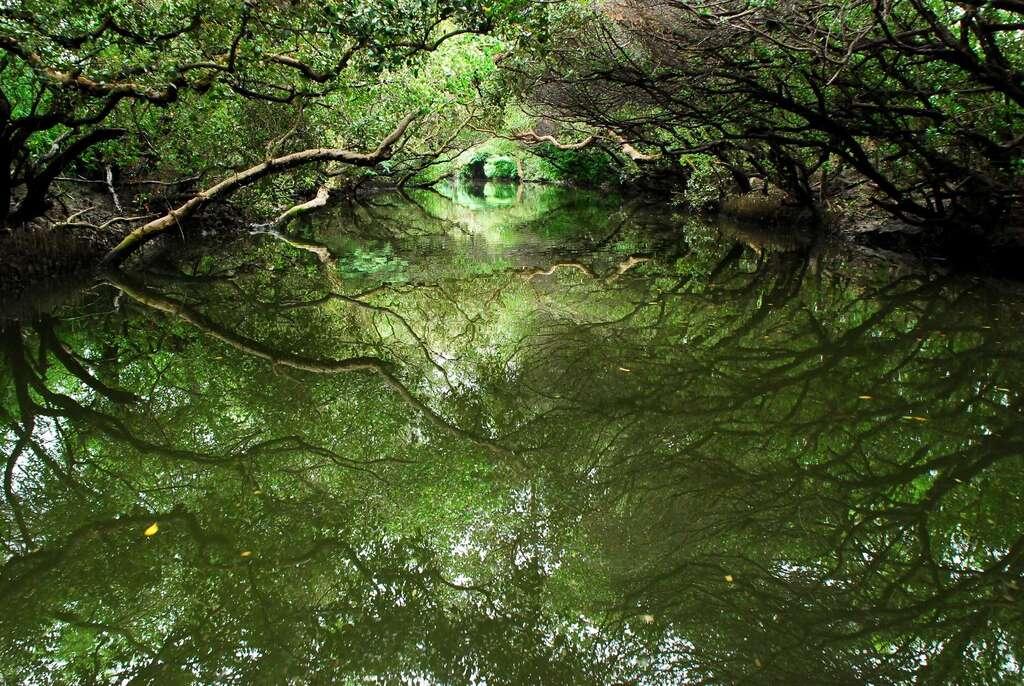 四草綠隧可體會不一樣的大自然感受