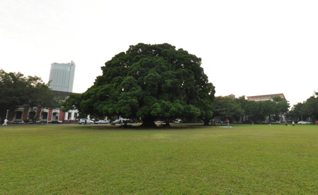 National Cheng Kung University Banyan Park(成大榕園)