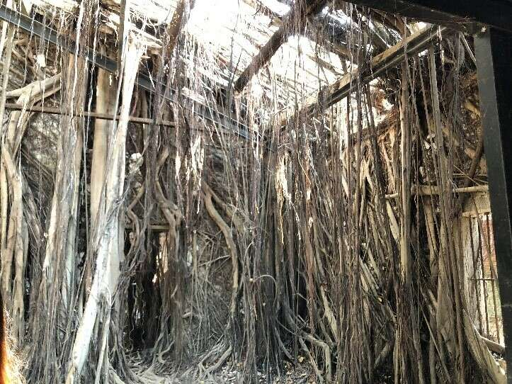 The inside of the Anping Tree House (2)