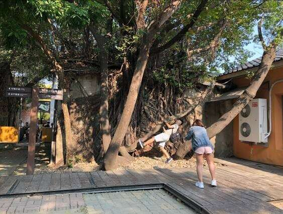 The inside of the Anping Tree House (3)